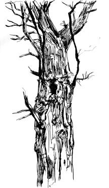 Amanda: Hollow oak, Savernake Forest, Wiltshire